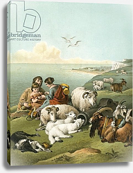 Постер Лэндсир Эдвин Children playing with sheep and goats on white cliffs