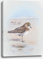 Постер A golden plover on the shore