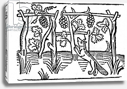 Постер Школа: Английская 15в The Fox and the Raisins, illustration from Caxton's 'Aesop's Fables', 1484