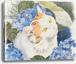 Постер Робинсон Анне (совр) Turkish Van