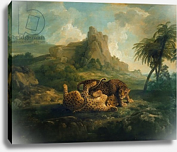 Постер Стаббс Джордж Tygers at Play, c.1763-8