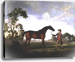 Постер Стаббс Джордж The Duke of Ancaster's bay stallion