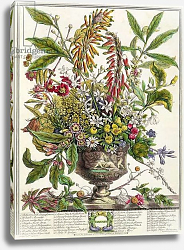 Постер Кастилс Питер January, from `Twelve Months of Flowers', by Robert Furber engraved by Henry Fletcher