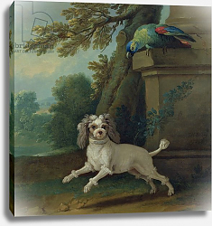 Постер Одри Жан-Батист Zaza, the dog, c.1730