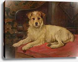 Постер Баркер Райт A Terrier on a Settee
