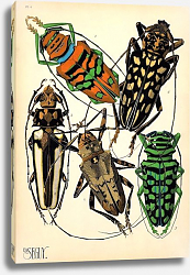 Постер Insects by E. A. Seguy №15