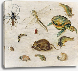 Постер Брейгель Ян Младший  A Study of Insects, Sea Creatures and a Mouse