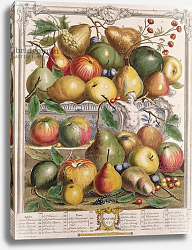 Постер Кастилс Питер January, from 'Twelve Months of Fruits', by Robert Furber engraved by Gerard Vandergucht 1732