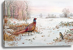 Постер Даннер Карл (совр) Pheasant and bramblefinch in the snow