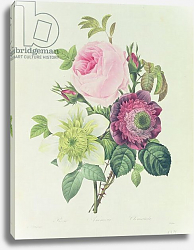 Постер Редюти Пьер Rose, anemone and Clematide, from 'Les Roses', 19th century