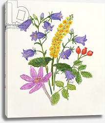 Постер Ходжсон Урсула (совр) Harebells and other wild flowers