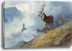 Постер Red deer watching a golden eagle hunt