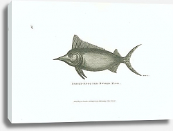 Постер Short-snouted Sword-fish