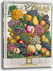 Постер Кастилс Питер October, from 'Twelve Months of Fruits', by Robert Furber engraved by Henry Fletcher, 1732