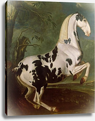 Постер Гамильтон Йоханн The Piebald Stallion at the Eisgruber Stud