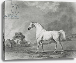 Постер Стаббс Джордж Mambrino, engraved by George Townley Stubbs pub. 1794
