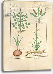 Постер Тестард Робинет (бот) Ms Fr. Fv VI #1 fol.137r Illustration from 'ThedBook of Simple Medicines'