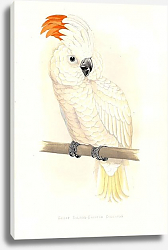 Постер Great Salmon-Crested Cockatoo