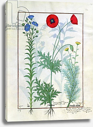 Постер Тестард Робинет (бот) Ms Fr. Fv VI #1 fol.130r Linum, Garden poppies and Abrotanum c.1470