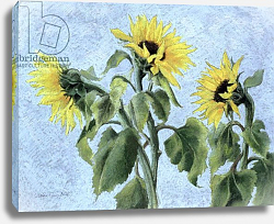 Постер Анжелини Кристиана (совр) Sunflowers, 1996