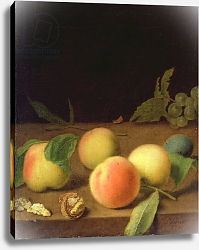 Постер Деннер Бальтазар Fruit Still Life, 1730