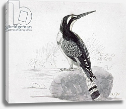 Постер Бевик Томас Black and White Kingfisher