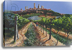 Постер Нил Тревор (совр) Grape Vines, San Gimignano, Tuscany, 1998