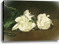 Постер Мане Эдуард (Edouard Manet) Branch of White Peonies and Secateurs, 1864