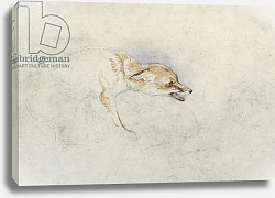 Постер Льюис Джон Study of a crouching Fox, facing right verso: faint sketch of fox's head and tail
