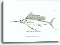 Постер Broad-finned Sword-fish