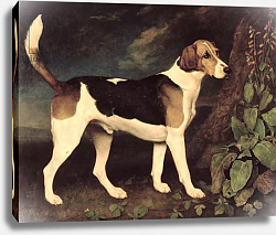 Постер Стаббс Джордж Ringwood, a Brocklesby Foxhound, 1792
