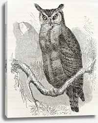 Постер Great Horned-owl  (Bubo virginianus). Created by Kretschmer and Jahrmargt, published on Merveilles d
