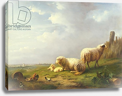 Постер Веррбекховен Евген Sheep and chickens in a landscape, 19th century