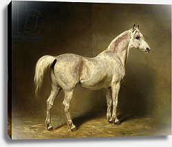 Постер Стеффек Карл 'Beatrice', the white arab saddlehorse of Helmuth Graf von Moltke, 1855