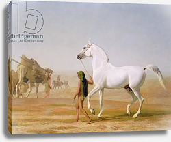 Постер Агассе Жак The Wellesley Grey Arabian led through the Desert, c.1810