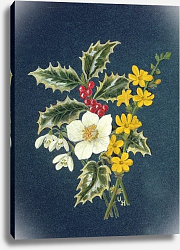 Постер Ходжсон Урсула (совр) Holly, Christmas Rose, Snowdrop and Winter Jasmine