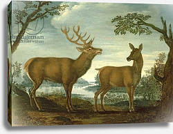 Постер Школа: Немецкая 18в. Stag and hind in a wooded landscape