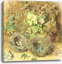 Постер Хант Уильям Primroses and Birds' Nests