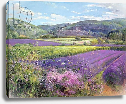 Постер Истон Тимоти (совр) Lavender Fields in Old Provence