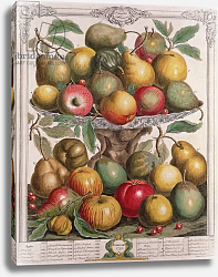 Постер Кастилс Питер February, from 'Twelve Months of Fruits', by Robert Furber engraved by James Smith, 1732