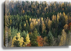 Постер Carpathian mountain in autumn