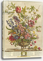 Постер Кастилс Питер February, from `Twelve Months of Flowers' by Robert Furber engraved by Henry Fletcher