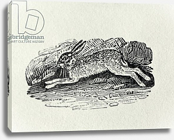 Постер Бевик Томас The Hare from 'History of British Birds and Quadrupeds'