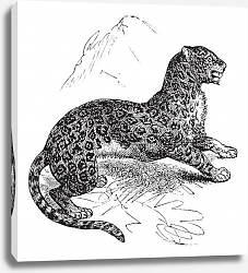 Постер Jaguar or Panthera onca vintage engraving