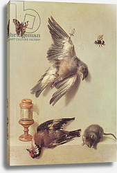 Постер Одри Жан-Батист Still Life of Dead Birds and a Mouse, 1712