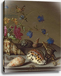 Постер Аст Балтазар Flowers, shells and insects on a stone ledge