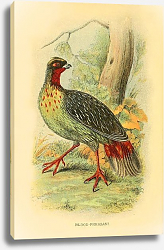 Постер Blood-Pheasant