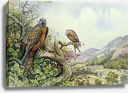 Постер Даннер Карл (совр) Pair of Red Kites in an Oak Tree,