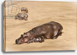 Постер Сандерс Франческа (совр) Hippo and calf, 2012,
