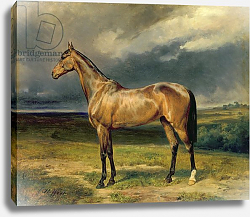 Постер Стеффек Карл 'Abdul Medschid' the chestnut arab horse, 1855